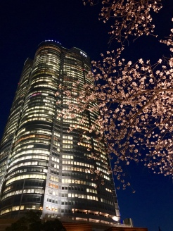 "7. The Tokyo City View and Sky Deck is located in Roppongi Hills, developed as a ""city within a city"". At the foot of the building is the small Mori Garden with a small pond, and in the night the cherry blossoms were illuminated."