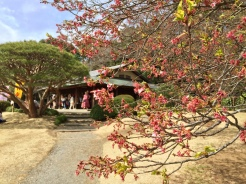 14. I visited the garden before the cherry blossoms were in full bloom, and even so the flora were a sight to behold. There are also a number of tea houses and large picnic spots - which we indulged in, as a group - and the garden is also very spacious.