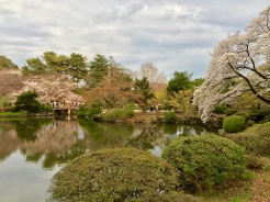 19. In addition to the flowers and the cherry blossoms, the Shinjuku Gyo-en National Garden is an excellent spot for a sultry stroll. One can easily spend up to half a day within the compound, crossing bridges, walking along the ponds, and people-watching too.