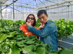 31. We went on a one-day Mount Fuji tour, which included strawberry picking at an orchard. Fantastic for strawberry lovers.