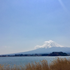 32. View of Mount Fuji from Oishi Park, which offers the best view of the mountain from Lake Kawaguchi. All of us agreed that the one-day tour was a good break from our free-and-easy itinerary, since we could visit many sights without worrying about transportation.
